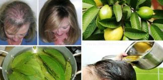 Guava leaves stop hair loss and add volume here is the recipe to make at home